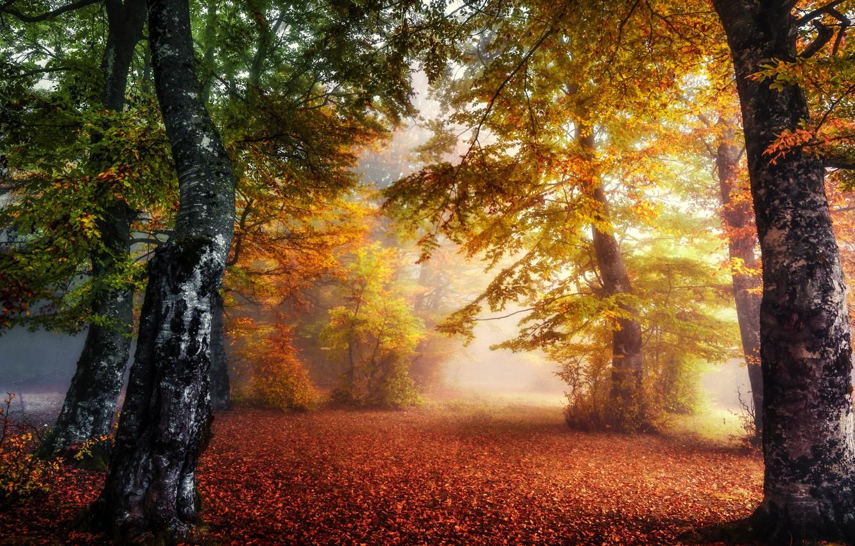 Photo wallpaper autumn, forest, nature, fog