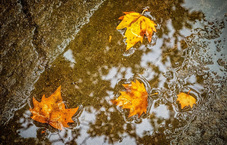 Photo wallpaper autumn, leaves, maple