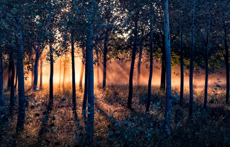 Photo wallpaper forest, trees, sunlight
