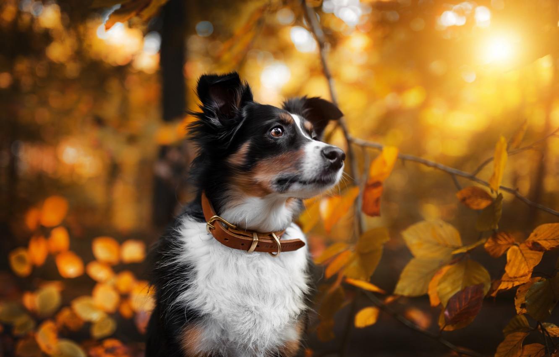 Wallpaper Autumn Nature Each Dog Images For Desktop Section Sobaki Download