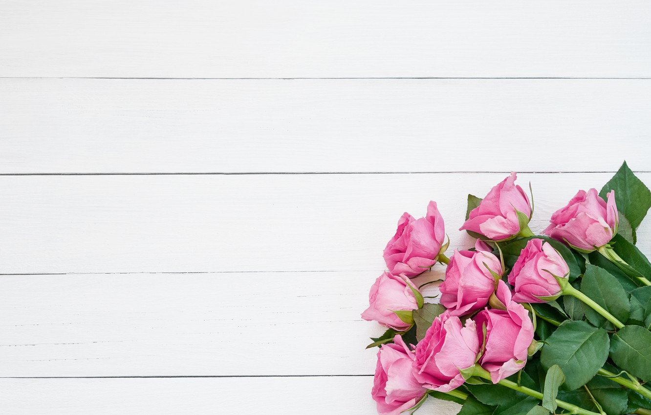 Photo wallpaper white, background, roses, Buds, pink, wood