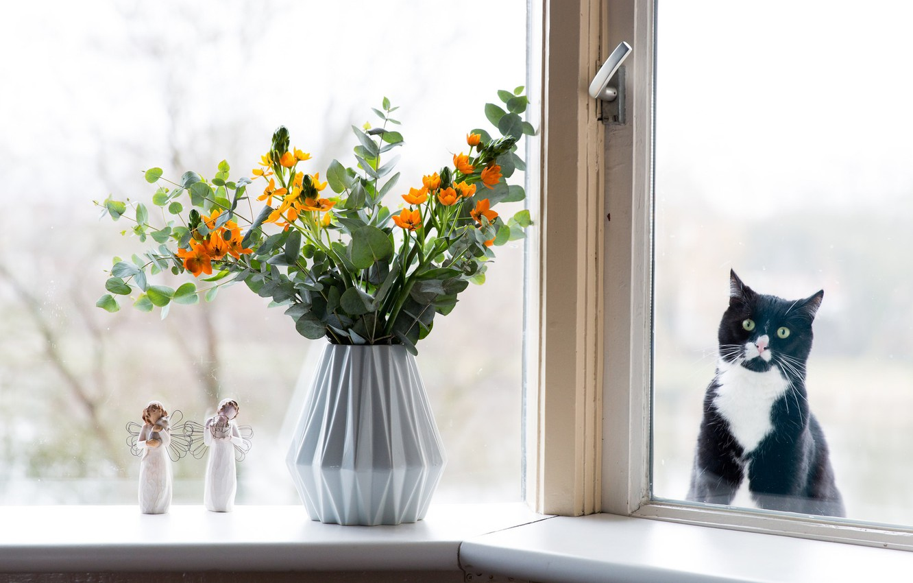 Photo wallpaper cat, eyes, cat, look, glass, flowers, pity, black, the situation, bouquet, humor, window, muzzle, vase, …