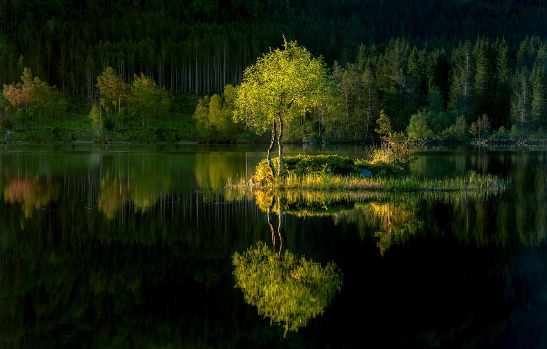 Photo wallpaper forest, lake, reflection, tree, island