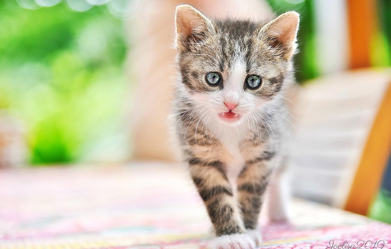 Photo wallpaper look, baby, muzzle, kitty, bokeh