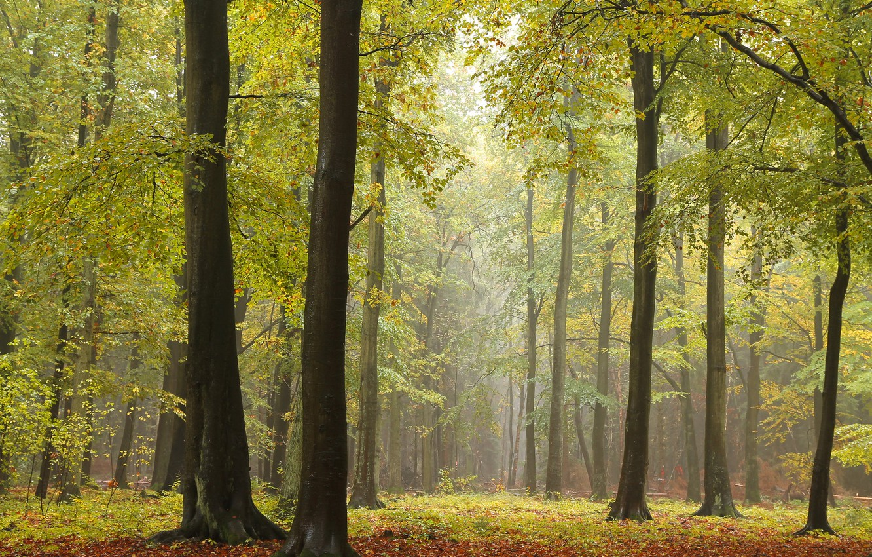 Photo wallpaper autumn, forest, trees, photo, trunks