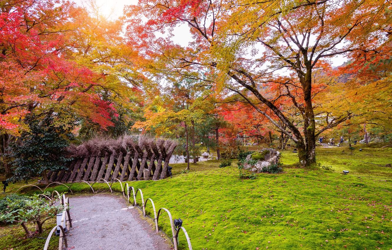 Photo wallpaper autumn, leaves, trees, Park, colorful, nature, park, autumn, leaves, tree