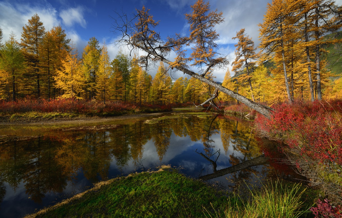 Photo wallpaper trees, Nature, Kolyma, stream Unknown, Maxim Evdokimov