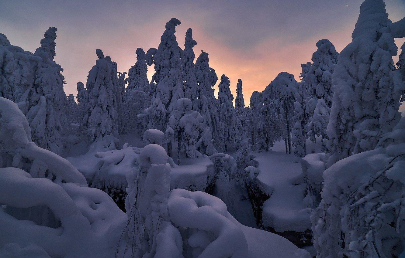 Photo wallpaper winter, snow, trees, nature, dawn, morning, ate