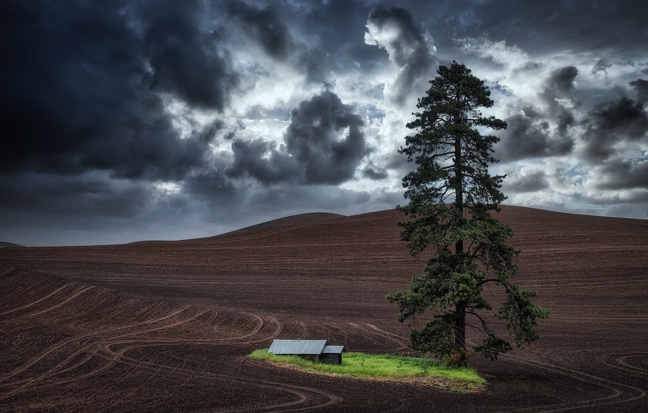 Photo wallpaper Oasis, Washington State, storm clouds, lone tree, tractor tracks, fallow land