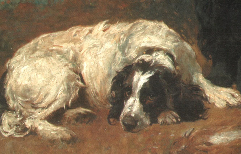 Photo wallpaper dog, lies, EMMS2, french spaniel