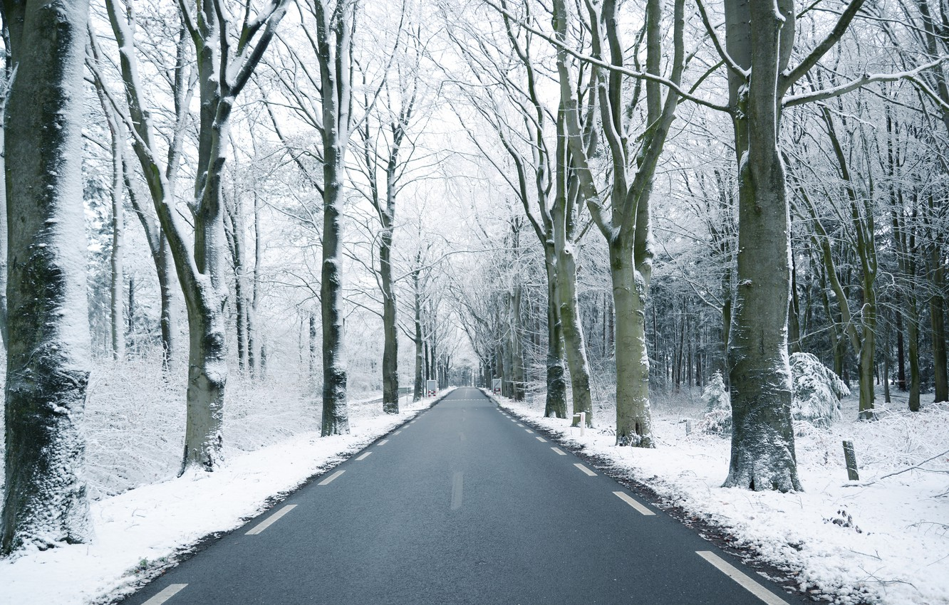 Photo wallpaper winter, road, forest, snow, trees, branches, trunks, perspective, highway, the forest, snowy