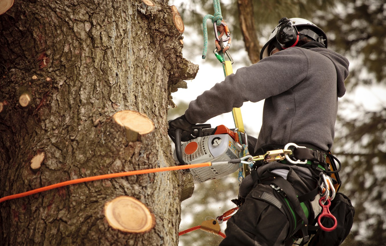 Photo wallpaper ropes, chainsaw, worker, safety measures, work at height