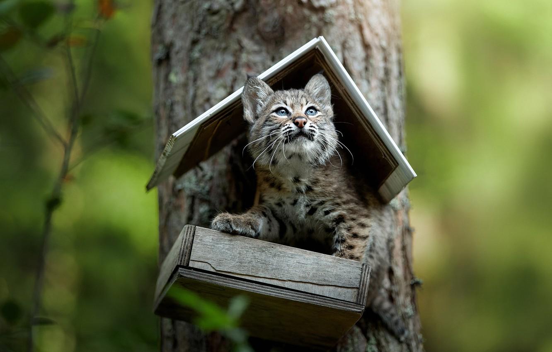 Photo wallpaper tree, cub, kitty, lynx, bokeh, feeder, a small lynx, Svetlana Pisareva, Mind you I'm in …