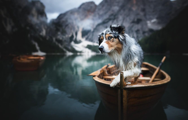 Photo wallpaper mountains, nature, lake, animal, boat, dog, dog, The Dolomites, Aussie