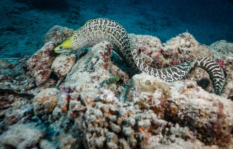 Photo wallpaper colors, reef, eel