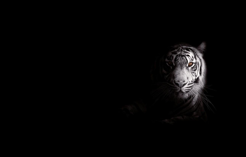 Photo wallpaper strips, tiger, predator, big cat, foo