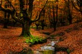 Picture autumn, forest, leaves, trees, branches, stream, trunks, foliage, forest