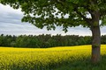 Picture field, forest, the sky, clouds, trees, flowers, branches, tree, foliage, yellow