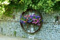 Picture wall, round, petunias