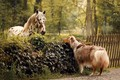 Picture horse, dog, friends
