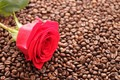 Picture mood, rose, coffee, Wallpaper, coffee beans, red rose, background, Bud, flowers