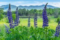 Picture greens, field, forest, summer, the sky, leaves, clouds, landscape, flowers, mountains, nature, green, background, hills, ...